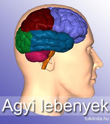 agyi lebenyek, agytályog